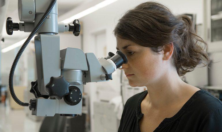 Unter dem Mikroskop werden die haarfeinen Elektroden bearbeitet, mit denen man die Aktivität der Nervenzellen misst.