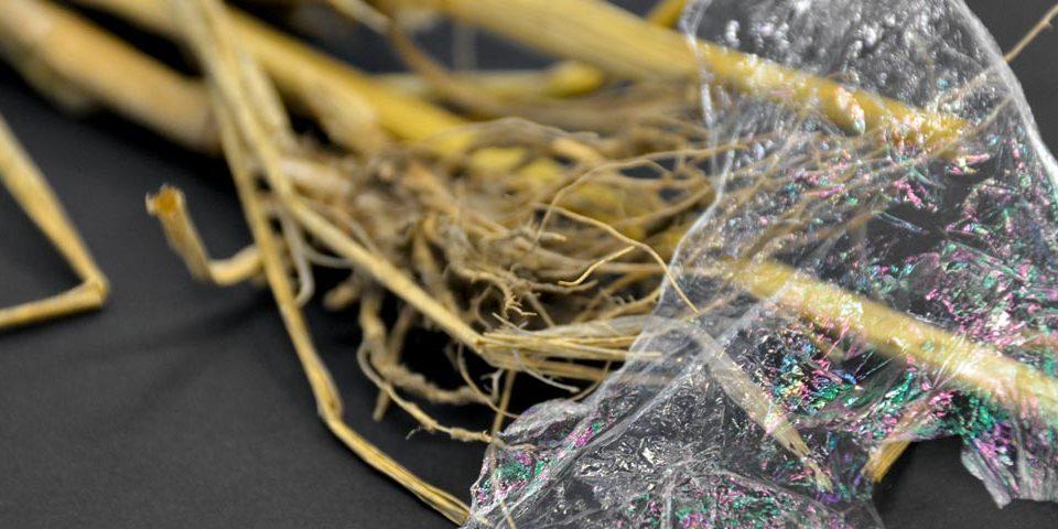 Stroh statt Öl: Die Folie aus Biokunststoff wurde aus hundertprozentig erneuerbaren Rohstoffen hergestellt.