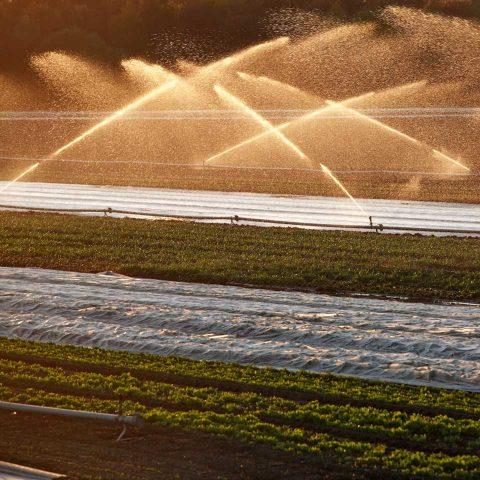 Für Landwirte ist entscheidend, wie hoch der Wassergehalt in der Wurzelzone ist. Doch der kann sich auf kleinstem Raum ändern und ist großflächig nur schwer messbar.