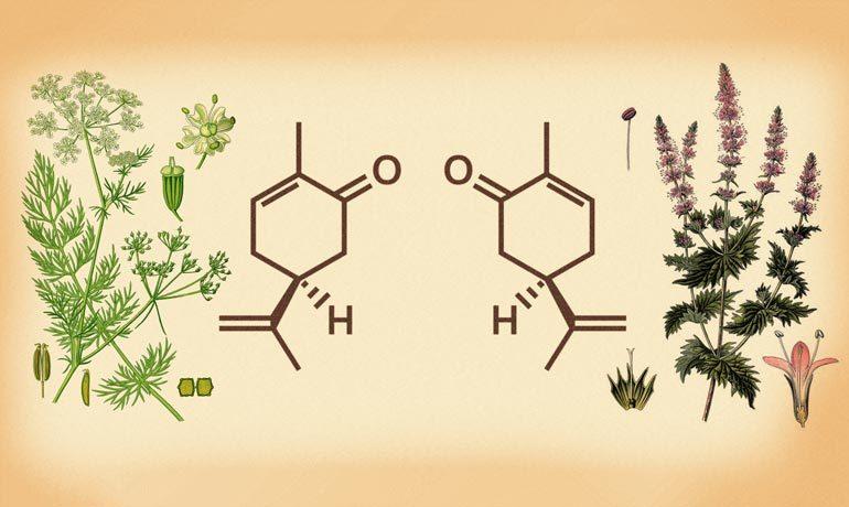 Zeichnungen und chemische Formeln von Minze und Kümmel